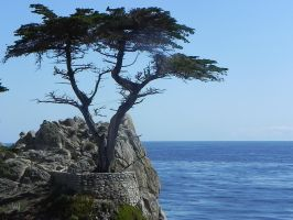 Lone Cypress by ron-brouillette