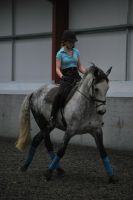 DressageTrain5 by RevyWood-Photography