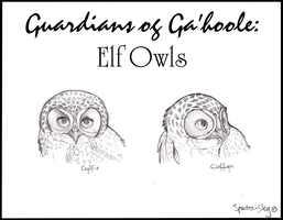 Elf Owls of Ga'hoole by Spectra-Sky