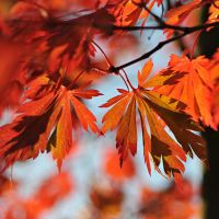 blazing autumn 3 by MorkOrk