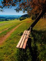 The bench and the summer by patrickjobst