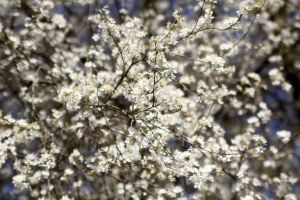 Spring has arrived by Budeltier