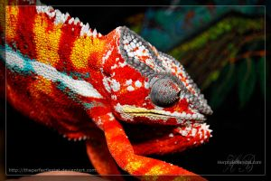 Chameleon by theperfectlestat