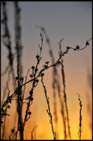 desert-flowers-at-dawn2 by pathworking