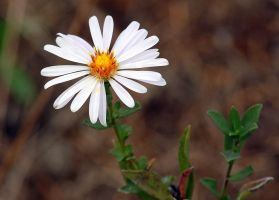 Side of the road flower. by smfoley