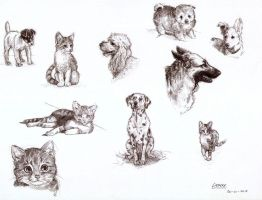 animal sketches by Liedeke