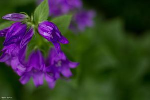 purple and green by blacky-mo