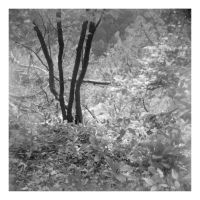 2014-256 The woods along the way by pearwood