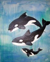 Orca Family by Jenny42