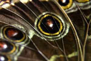 Butterfly Wing by Daemare