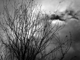 Branches Against an April Sky by ThornThorizas