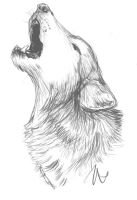 Howling Wolf Sketch by flashf0x