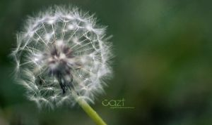 Make a wish by cazt1811