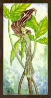 Jack-in-the-Pulpit by MisticUnicorn