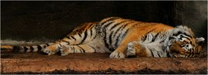 Out of the snow by Monkeygrip