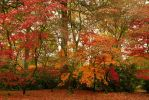 Autumn Curtain by parallel-pam