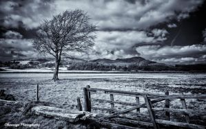 Screel Infrared by Okavanga