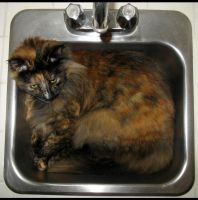 kitty in the sink by uberbechin