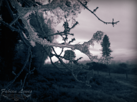 Branch ( Ice day, 12/12/12 ) by TcnBiob
