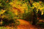 Herbst 06 by Anschi71