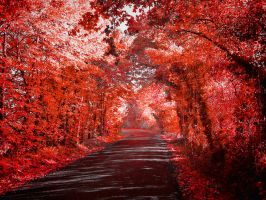 Red Forest by ArtClem