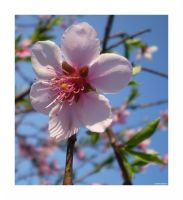 Pink Lady Flower by Lila-Green