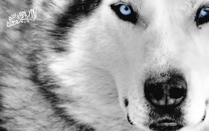 white wolf wallpapers by d7mey