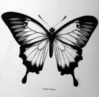 STOCK IMAGE Butterfly 1 by LamollesseStockImage