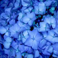 Blue in Blue II by larksgar