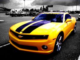 Bumble Bee by angelaustin