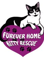 Furever Home Kitty Rescue logo  GIF by Keymagination