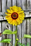 From my Garden by Alabamaphoto