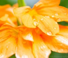 The Orange Calm After the Storm by lennerose