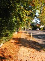 Autumn24: Road by brego