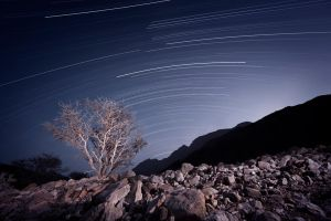 Desert Star Trails by almiller