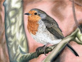 Robin - colored pencil drawing by kad-portraits