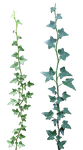 Ivy 03 png by gd08