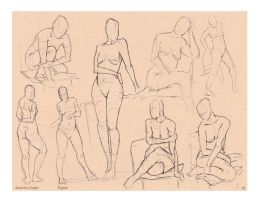 Figures - Comparative Anatomy by CatCouch