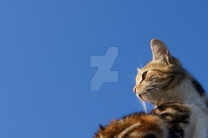Sky cat by Deviantart-gleb