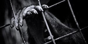 Caged by milktoday