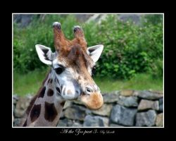 At the Zoo part 3 by lexidh