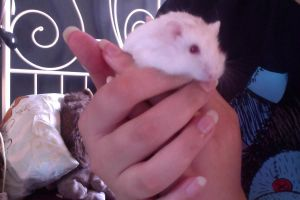 My new Baby hamster Moondust by MyRealEscape