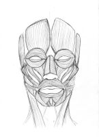 Front View: Muscles of the face by SteveGibson