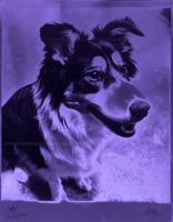 Solarized Kimmie in Purple by MeMiMouse