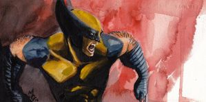 Wolverine Watercolor by mattgoodall