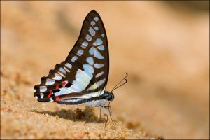 Sime Forest Butterflies III by log1t3ch