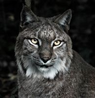Refined Editing: Lynx by Flamablep