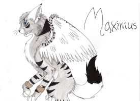 Maximus :AT: by Catdragons