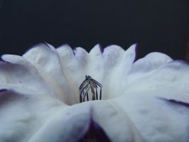 Angel's Trumpet by stock1-2-3