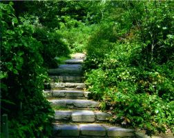 The Eden Series: Steps to Eden by vipofpoetry